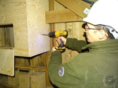 Barn Owl Internal Provision Drilling Peephole