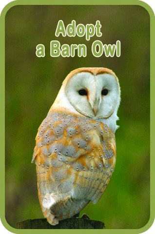 Adopt a Barn Owl using Internet banking