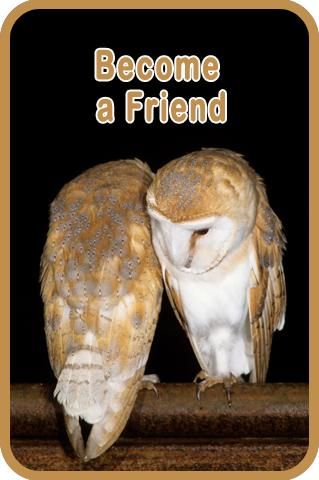 Become A Friend of the Barn Owl Trust