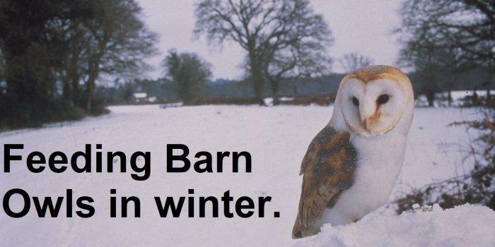 BAROW Dec Jan Resized