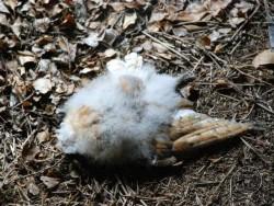 Bad Barn Owl Nestbox Design 02