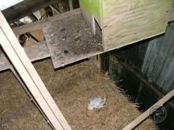 Bad Barn Owl Nestbox Design 04