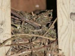 Bad Barn Owl Nestbox Design 08