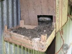 Bad Barn Owl Nestbox Design 15