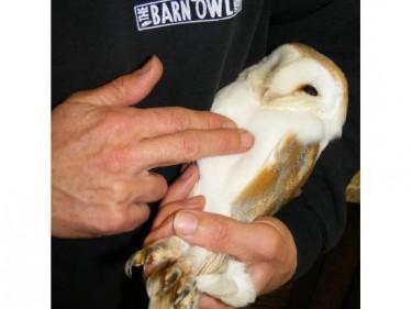 Barn Owl Health Check
