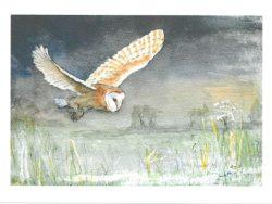 Barn Owl Quartering B Woodford