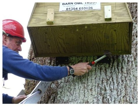 Barn Owl Tree Box Fixing On Tree