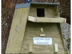 Barn Owl Tree Box In Place