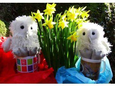 Barn Owl Trust 2 Owlets Ceramic Mugs