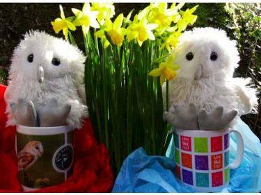 Barn Owl Trust 2 Owlets In Mugs