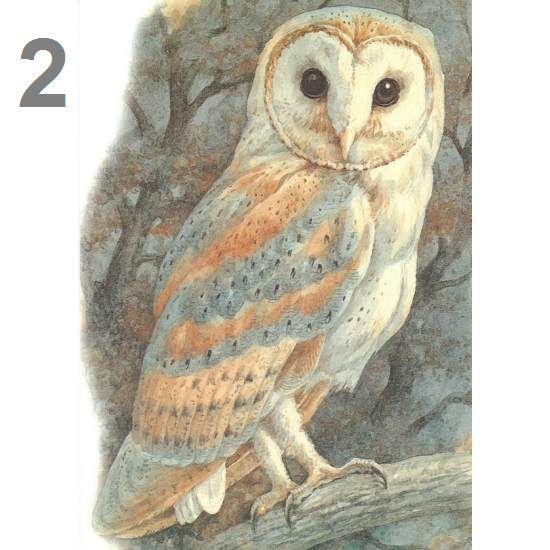 Barn Owl Trust Barn Owl Postcard (Painting)