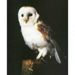 Barn Owl Trust Barn Owl Poster