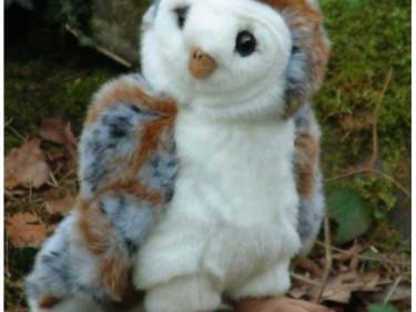 Barn Owl Trust Cuddly Barn Owl On Rock