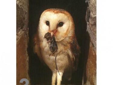 Barn Owl Trust Dinner Time A6 Card