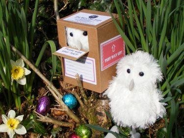 Barn Owl Trust Easter Owlet With Eggs