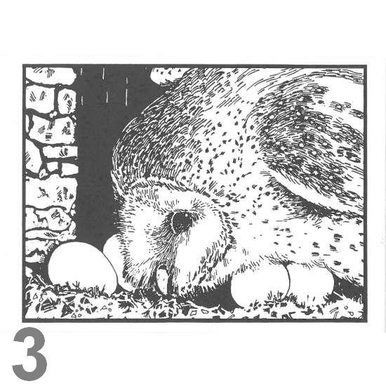 Barn Owl Trust Expectant A6 Black & White Card