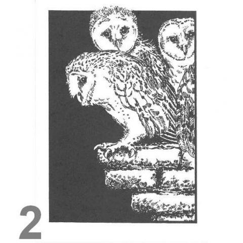 Barn Owl Trust First Flight A6 Black & White Card