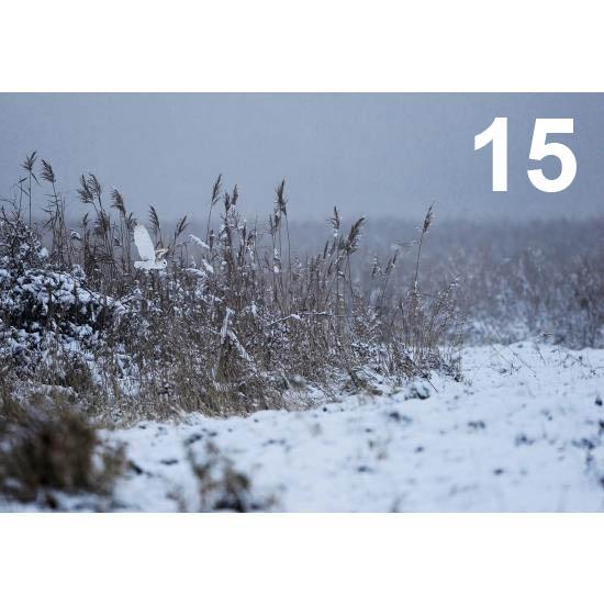 Barn Owl Trust Flying Through The Snow Craig Jones