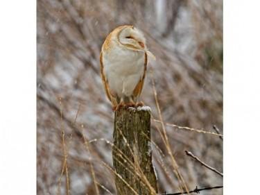 Barn Owl Trust Frist Noel Russell Savory