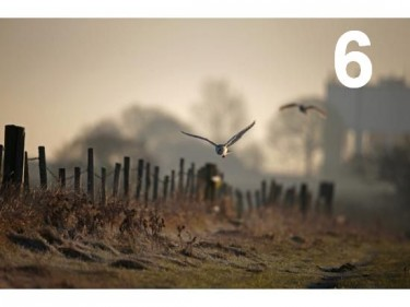 Barn Owl Trust - Frosty Dawn A6 Card
