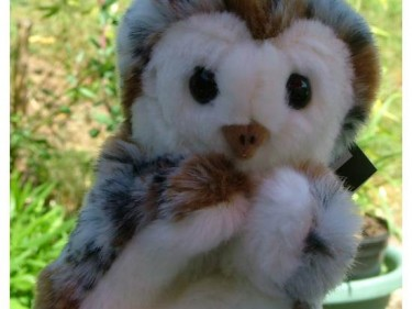 Barn Owl Trust Glove Puppet Cropped
