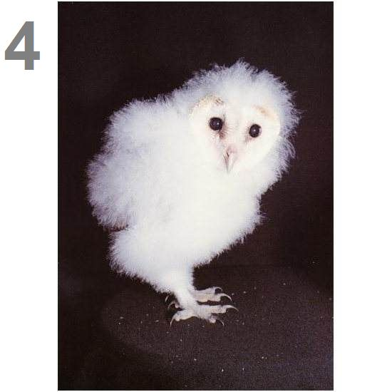 Barn Owl Trust New Moon Postcard
