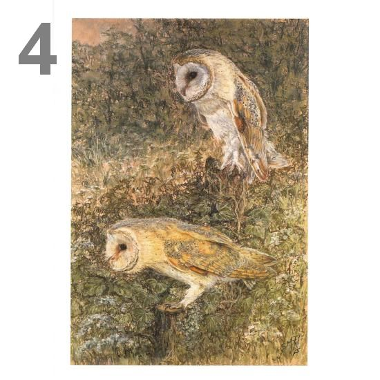 Barn Owl Trust Night Duty A5 Card