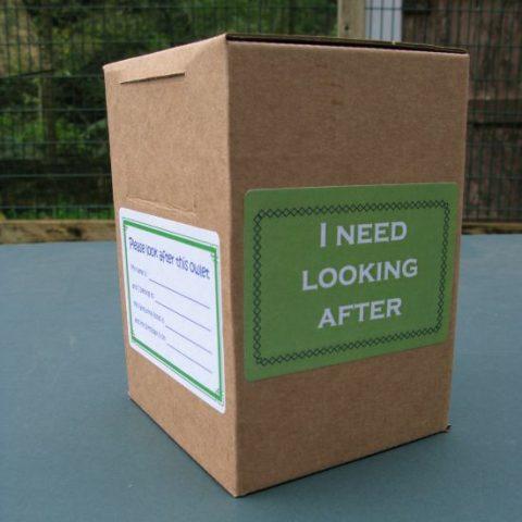Barn Owl Trust Owlet Nestbox