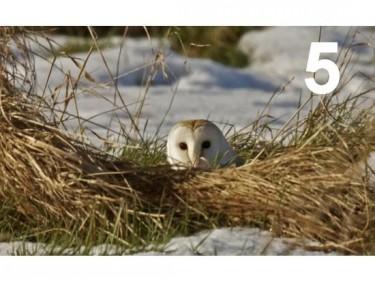 Barn Owl Trust Peek A Boo A6 Card