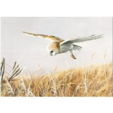 Barn Owl Trust Silent Flight A5 Card