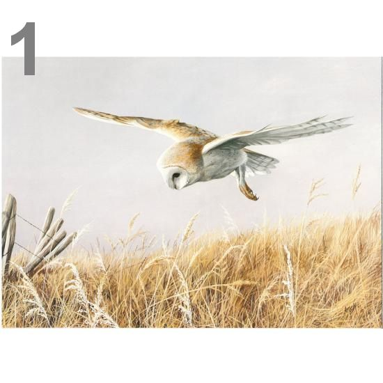 Barn Owl Trust Silent Flight A5 Card1