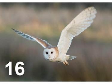 Barn Owl Trust Silent Night Mark Fullerton