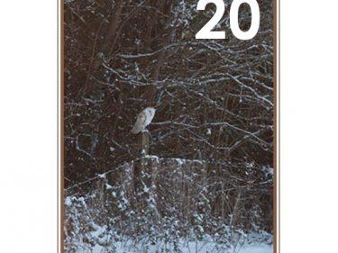 Barn Owl Trust Snow Bird