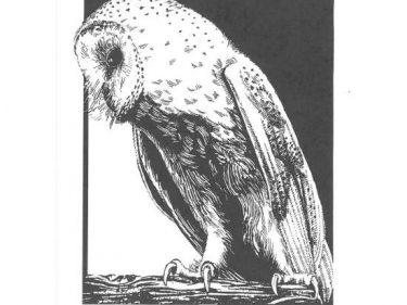 Barn Owl cards A6 Black & White