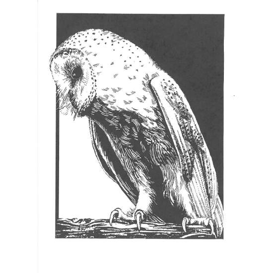 Barn Owl cards A6 Black & White