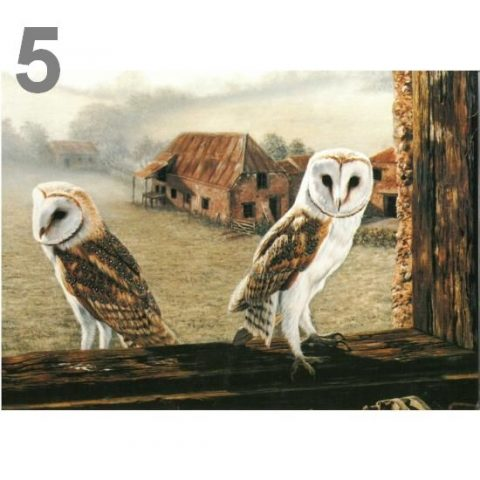 Barn Owl Trust Welcome Return A5 Card