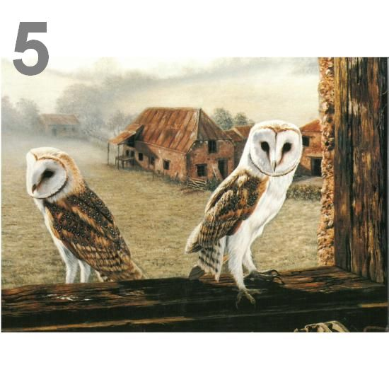 Barn Owl Trust Welcome Return A5 Card