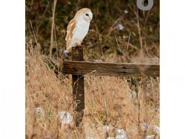 Barn Owl Trust Winter Hunting A6 Card