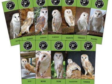 Barn Owl Trust Bookmarks
