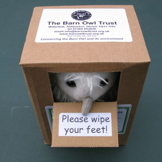 Barn Owl Trust Owlet Peering Out Of Box
