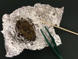 Barn Owl Trust Pellet Dissection