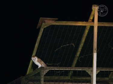 Barn Owl Mobile Aviary Release LLP Wildlife Diary August 2018