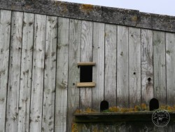 Barn Owl Provision Holes Buildings Barn 03
