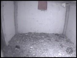 Barn Owl Webcam Nestcam Screenshot 20th January 2016