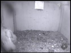 Barn Owl Webcam Nestcam Screenshot 5th August 2015