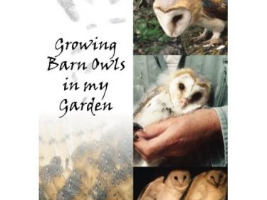 Barn Owls In My Garden by Paul Hackney