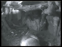 Barn Owl Nestcam Lost Gardens Of Heligan