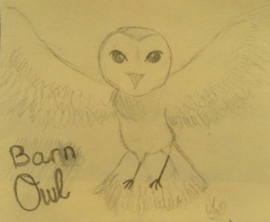 Barn Owl drawing by Bella