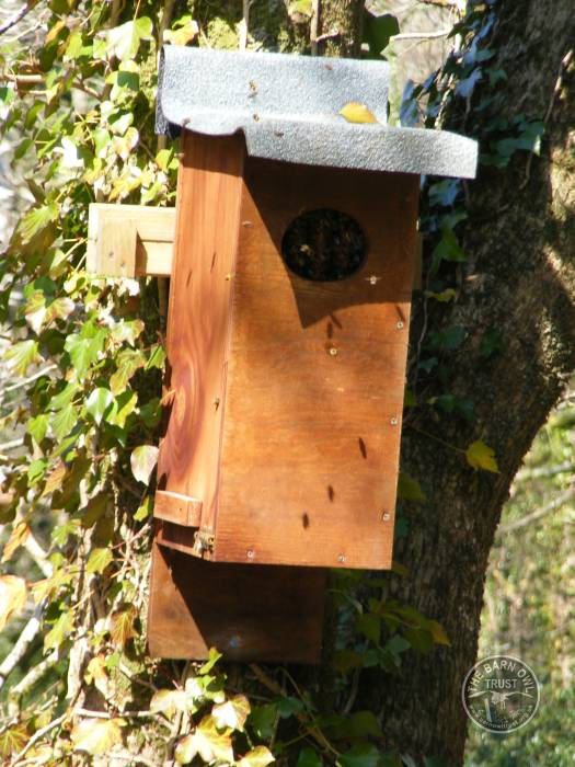 Bee Hive In A Duck Box LLP Wildlife Diary