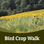 Birdcrop